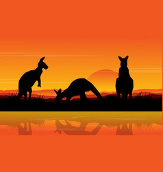 Kangaroo on the lake scenery silhouettes vector