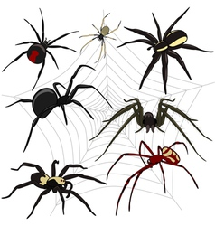 Spider set vector