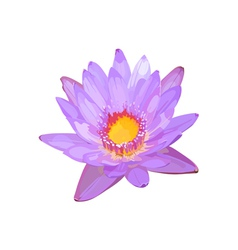 Lotus flower lilac vector