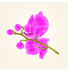 beautiful orchid purple stem with flowers and vector image vector image
