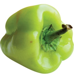 Green pepper on an isolated white background vector