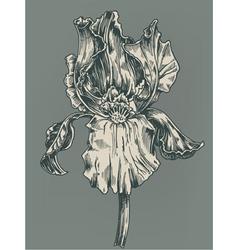 vintage hibiscus vector image vector image