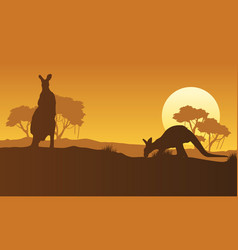 On the hill kangaroo scenery silhouettes vector