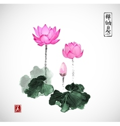 Pink lotus flowers hand drawn with ink vector image vector image