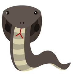 Cobra snake in gray color vector