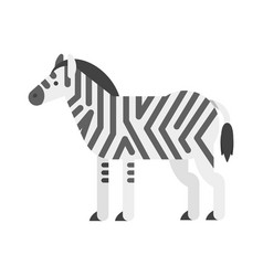 flat style of zebra vector image vector image
