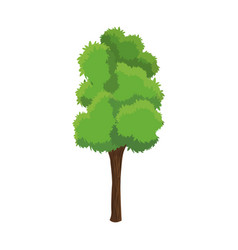 Tree woody foliage nature over white background vector
