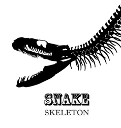 Snake skeleton vector