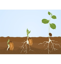 Germination vector