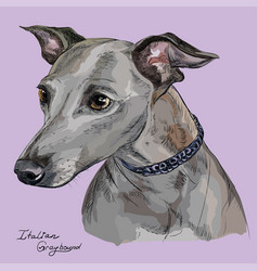 italian greyhound colorful hand drawing portrait vector image vector image