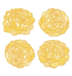 set of beautiful flower isolated on white vector image vector image