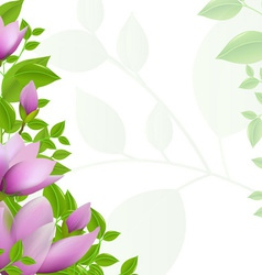 Magnolia background vector