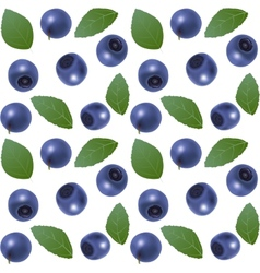 Seamless blueberry background vector
