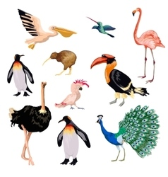 Exotic birds set vector