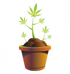 cannabis pot vector illustration vector image