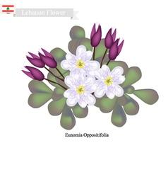 Eunomia oppositifolia native flowers in lebanon vector