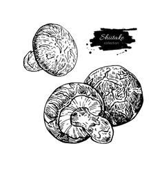 Shiitake mushroom hand drawn vector image