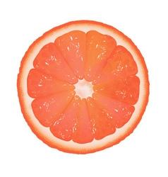Grapefruit slice vector image