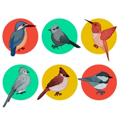 Colorful birds different birds set of birds vector