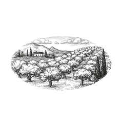 Olive grove landscape vector image vector image