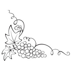 Design element - Grapevine vector image