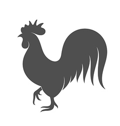 Chicken black bird on white background vector