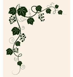 Beautiful grape vine green silhouette on beige vector image