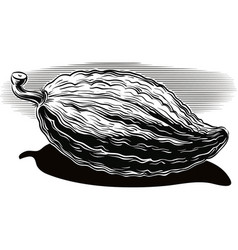 Fruits of cocoa on a white background vector