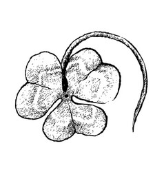 Hand drawn of three leaf clovers on white backgrou vector