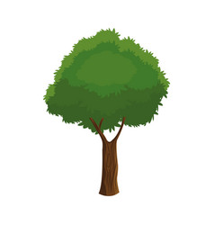Tree plant organic foliage over white background vector