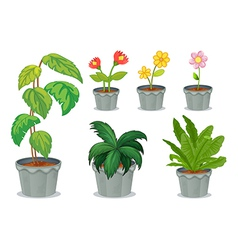 Six pots with plants vector