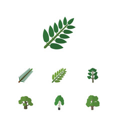 Flat icon nature set of acacia leaf timber tree vector
