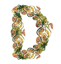 Capital letter D vector image vector image