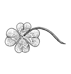 Hand drawn of four leaf clovers on white backgroun vector