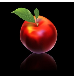 Red nectarine isolated on black background vector
