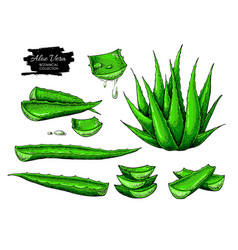Aloe vera set hand drawn vector