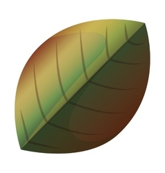 Isolated leaf design vector