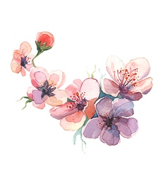 The spring flowers watercolor isolated vector
