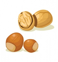 Hazelnut walnut vector