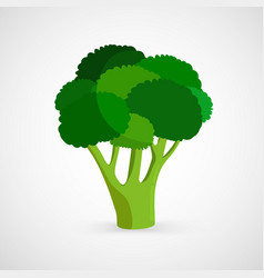 fresh green piece of broccoli vector image vector image