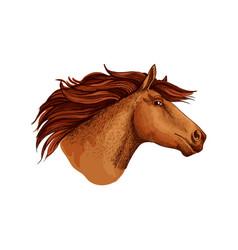 horse racer mustang head sketch symbol vector image
