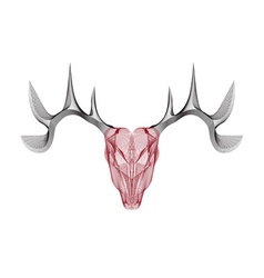 Line craft skull of deer vector