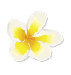 White tender flower vector