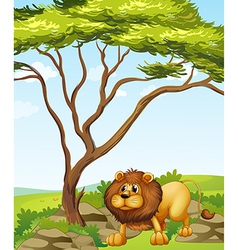A lion near a big tree in the hills vector image
