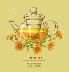 Calendula tea vector