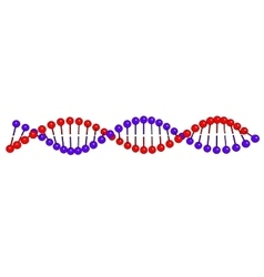Dna molecule on white background image vector