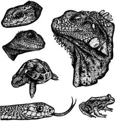 Reptiles - hand drawn vector