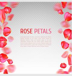 Rose petals border vector