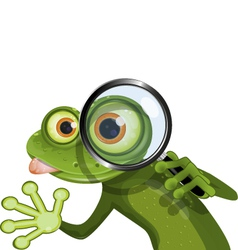 Frog and magnifying glass vector image