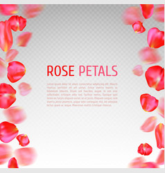 Rose petals border vector